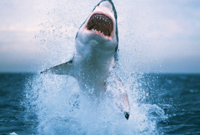 twitter shark attacks