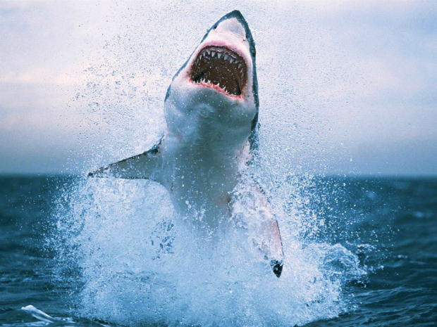 twitter shark attacks