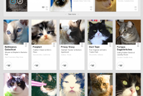 linkedin cats you may know april fools day