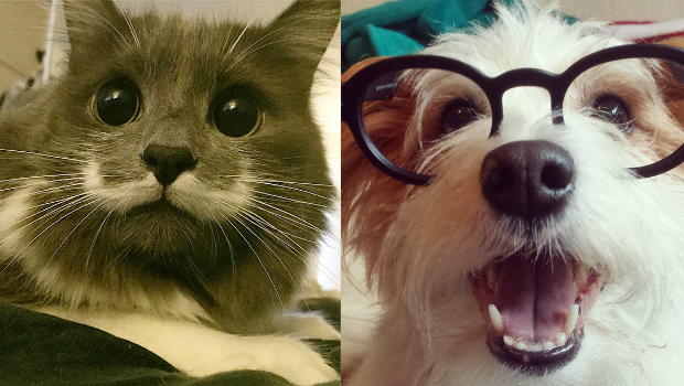 pets with most instagram followers 2015